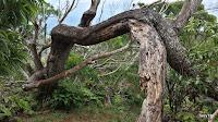 Hawaii Loa Arch