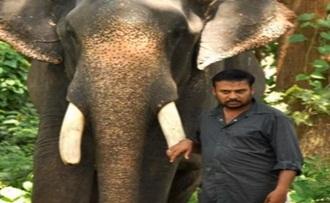 Prabhu Solomon plans to make Kumki 2 With Out Lakshmi Menon