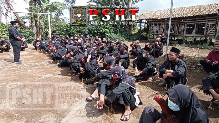Tes Ayam Jago Siswa PSHT Ranting Sekincau, Belalau dan Batu Ketulis Cabang Lampung Barat