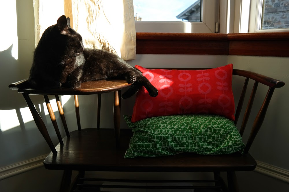 Black cat (Gizmo) basking in the sunshine