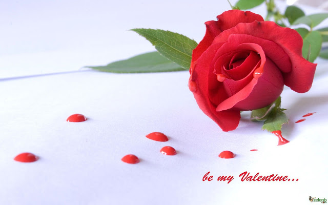 Rose-day-whats-app-dp-status