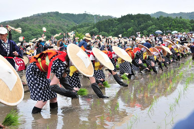 Mibu no Hanadaue (rice planting ceremony) at Kita-Hiroshima Town, Hiroshima Pref.