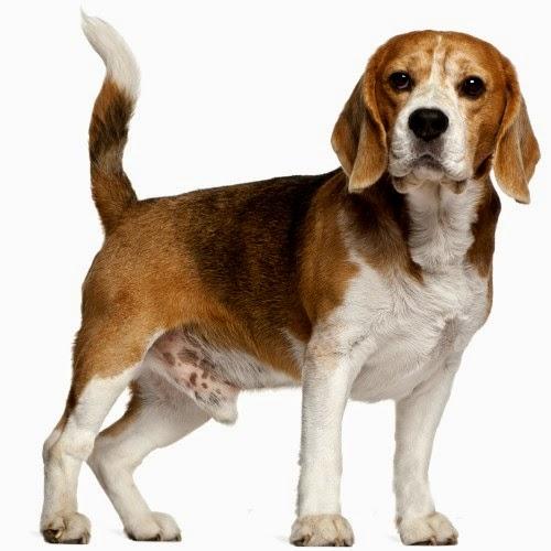 b8310768f463 Αρσενικά ονόματα σκύλων. - Puppy Doggy