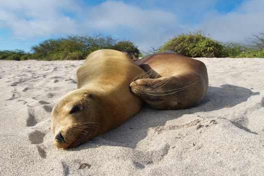 Galapagos Islands, my favorite place in the world!