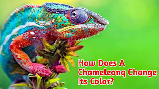 How does a chameleonq change its color?