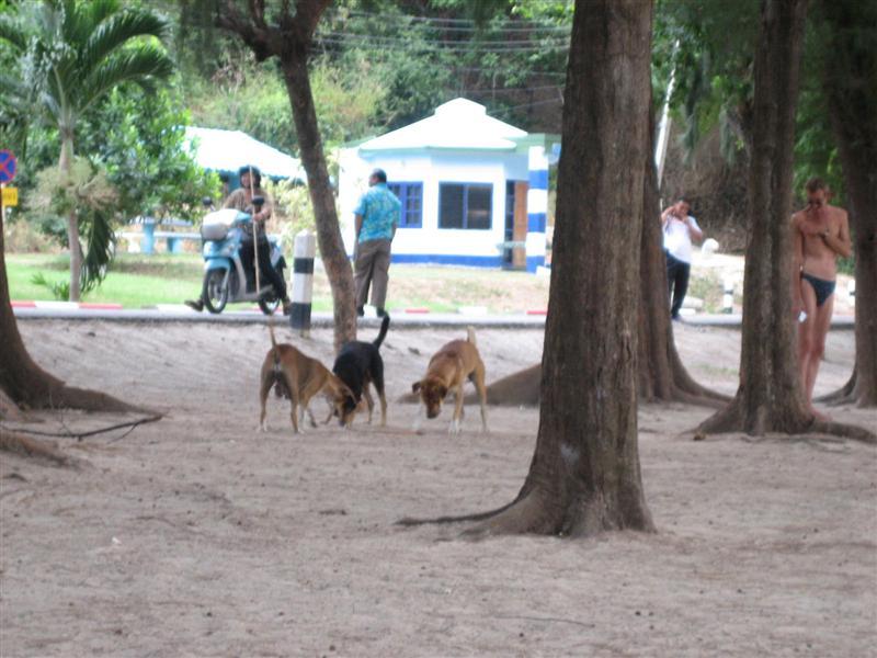 schlange und hund