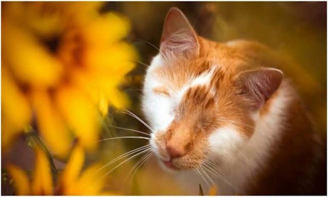 """""""Я слепой, но вижу сердцем!"""" Котик воспринимает мир не так, как все"""