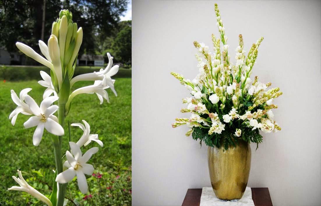 Fakta Unik Bunga Sedap Malam Dan Manfaatnya Gambar Bunga