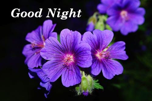 Nice Good Night
