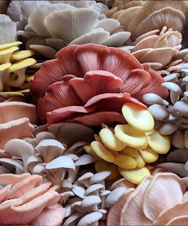 Mushroom farming training 2021