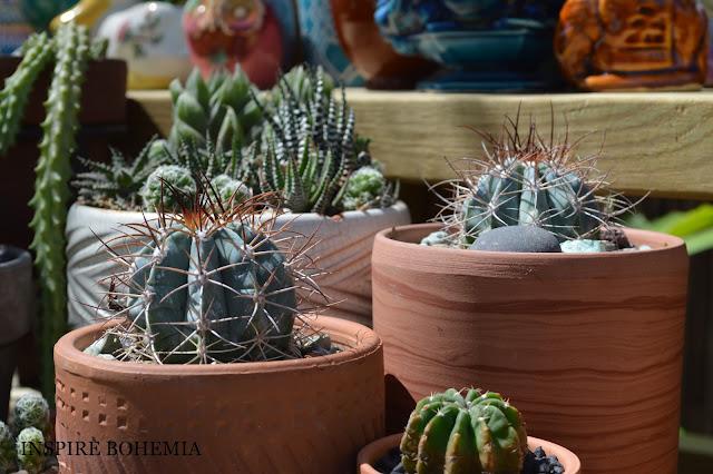 Terracotta cactus planters - Designer Cactus and Succulent Planters Garden Design Inspire Bohemia - Miami and Ft. Lauderdale Succulent Business