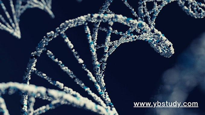 What is Genetic Material  : Defination, types and functions of Genetic Material