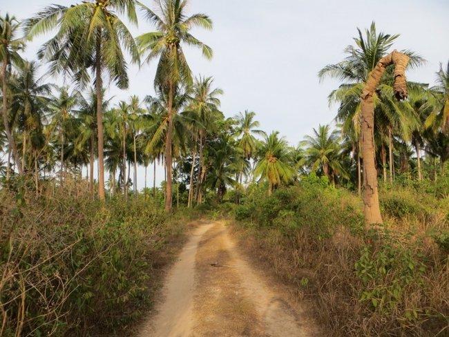 Грунтовка между пальм
