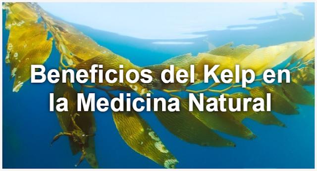 beneficios del kelp