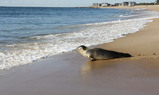 Image result for charlestown seal release