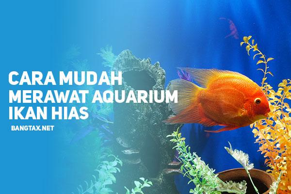 Cara Mudah Merawat Aquarium Ikan Hias