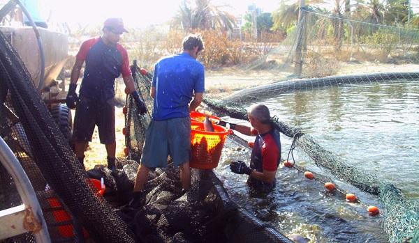 Công nghệ nuôi cá trên sa mạc của Israel 1
