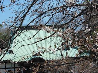 光明寺のソメイヨシノ