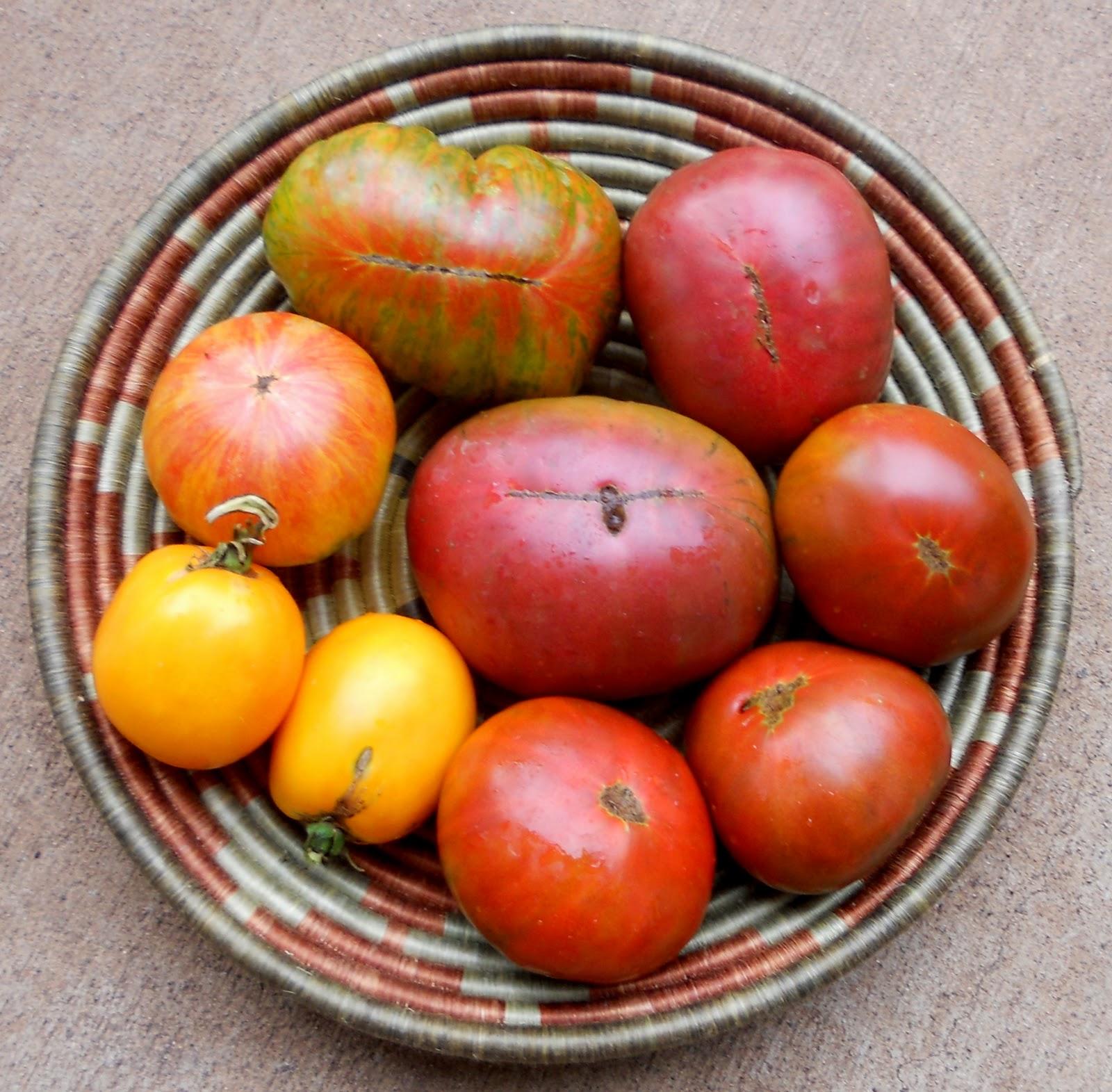 A Kitchen Garden In Kihei Maui Growing Tomatoes