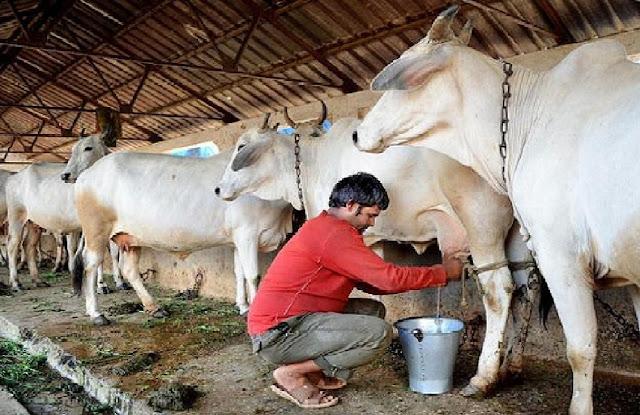 सितंबर से पूरे समस्तीपुर में दूध की बिक्री हो जाएगी बंद, हत्या के विरोध में एकजुट हुए सारे सुधा डिस्ट्रीब्यूटर
