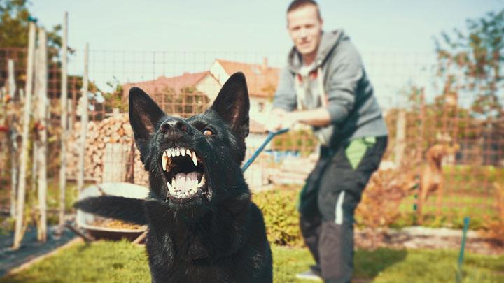 world-most-aggressive-dogs