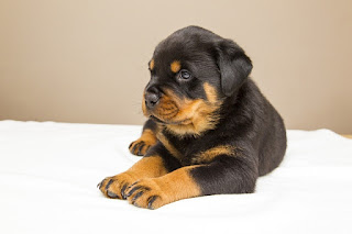 10 Most Excellent Small Watchdogs
