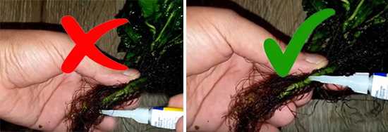 Do not glue roots of Java Fern to driftwood