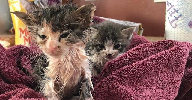 Девушка спасла уличного котенка, который сам просил помощи