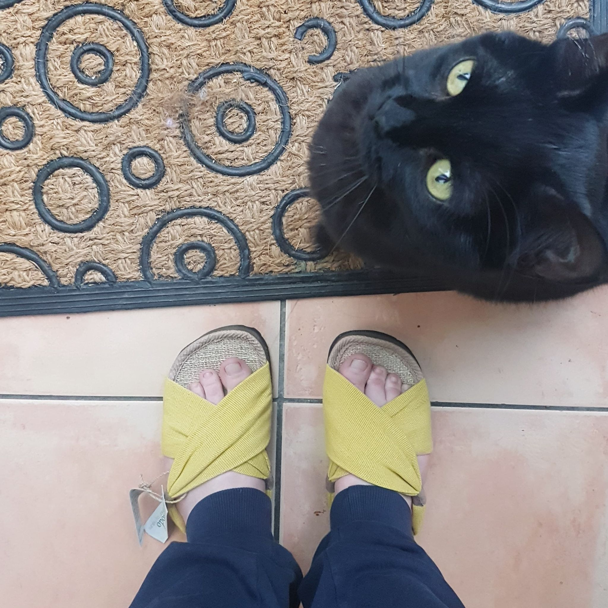 yellow and brown sustainable ethical sandals from Komodo standing next to a black cat looking up