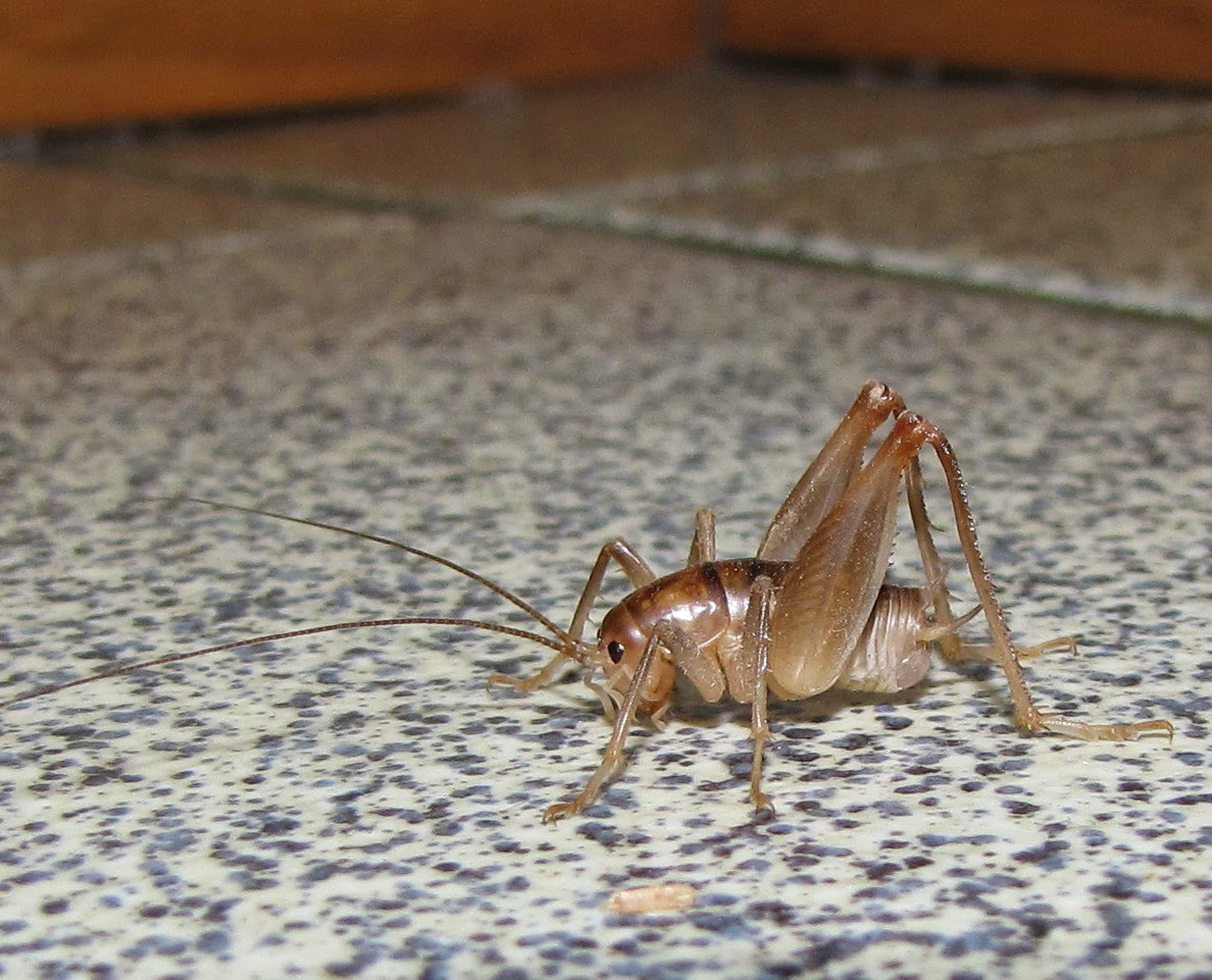 Image Result For How Do You Get Rid Of Crickets In The Ba T