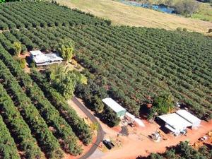 Perangkap Palsu Petik Epal Di Australia