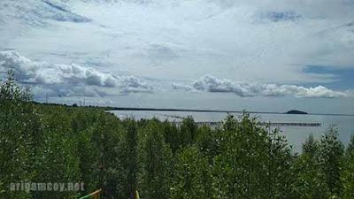 mangrove mendalok