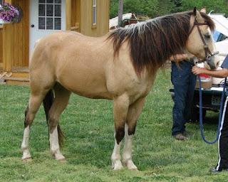 horses and art, pssm horse, horse artist Jen Pratt