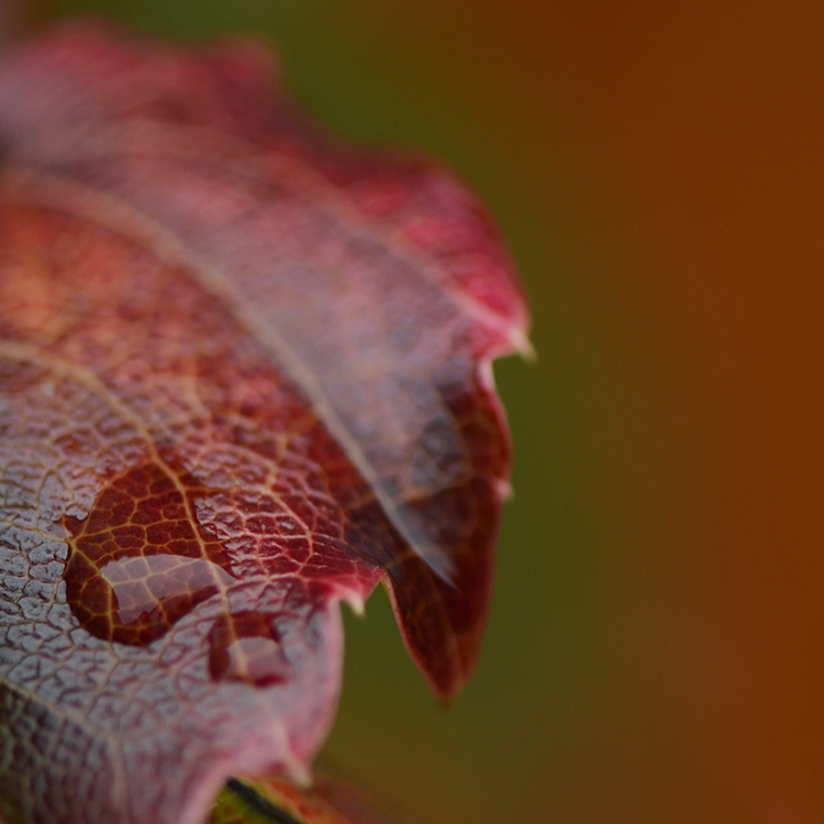 Feuilles sous la pluie automne