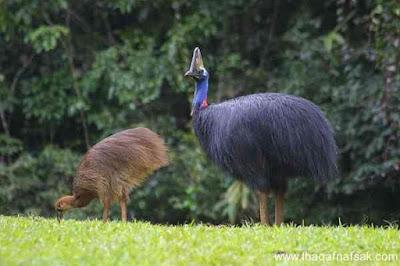 أضخم أنواع الطيور لم تكن تعلم بوجودها من قبل