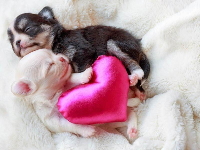 Puppy Development from Newborn to One Week