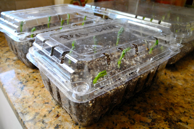 A Song Of Sixpence: Starting Seeds For Your Garden