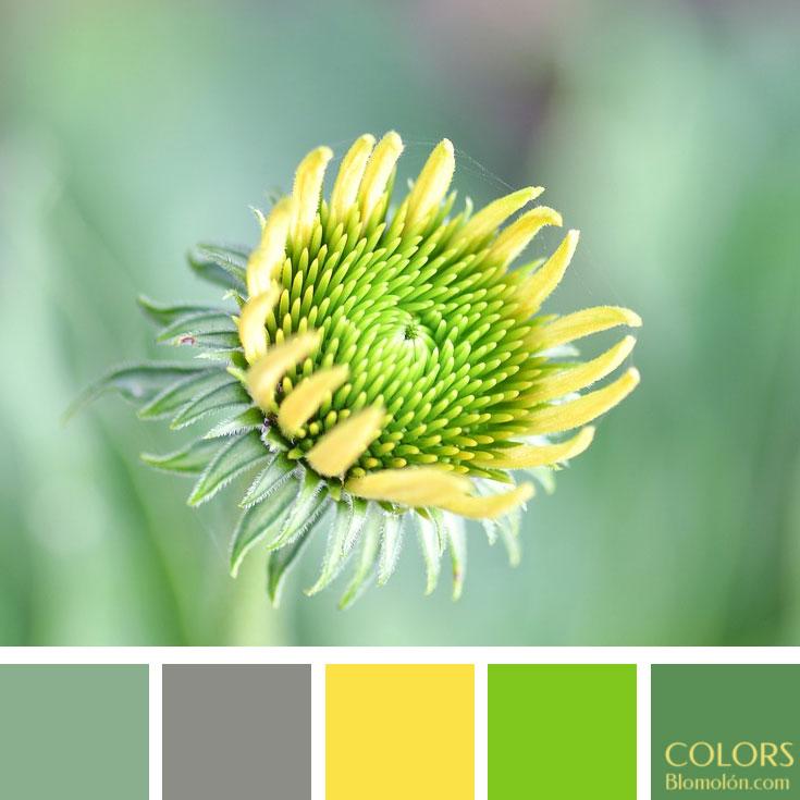 variedad_en_color_paletas_de_colores_96