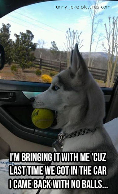 Funny Dog Ball Meme Joke Image