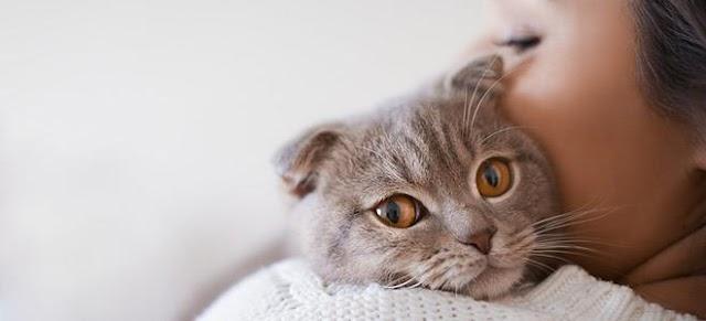 Τι λέει η επιστήμη για τις γάτες και την επίδρασή τους στον άνθρωπο;