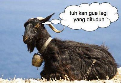 Image result for Gambar kambing hitam