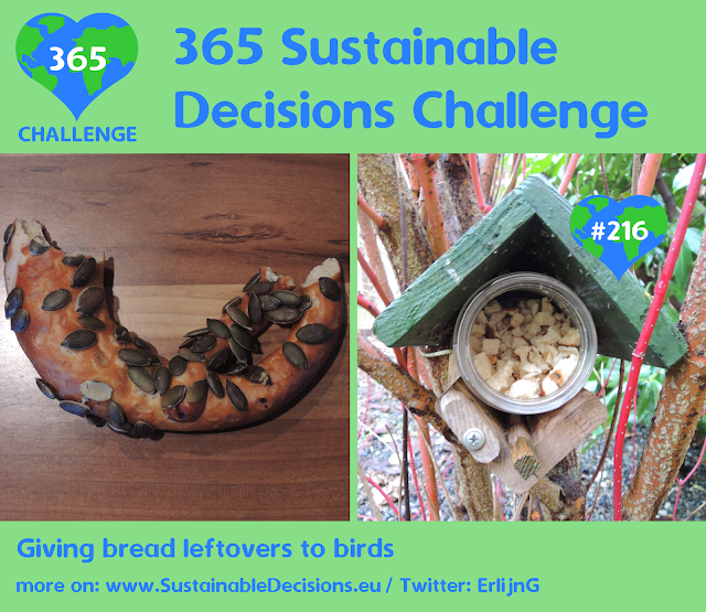 Giving bread leftovers to birds reducing food waste sustainability sustainable living