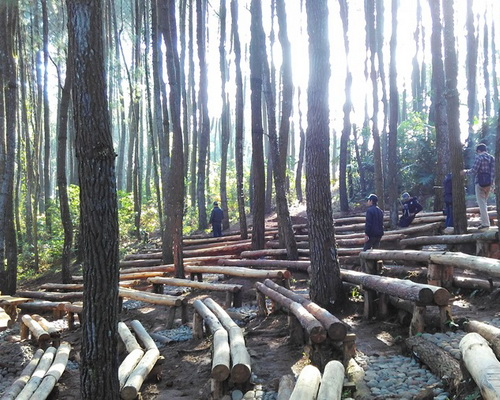 Tinuku.com Open air theater in Mangunan pine forest constructed adjust sloping contours and without removing trees