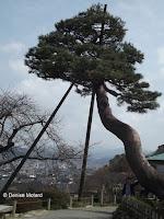 Two posts supporting a pine tree, with a mountain view - Kenroku-en Garden, Kanazawa, Japan