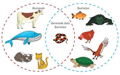 Tuliskan manfaat perkembangbiakan hewan secara ovipar dan vivipar