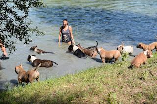 Angelurlaub Ungarn Hunde
