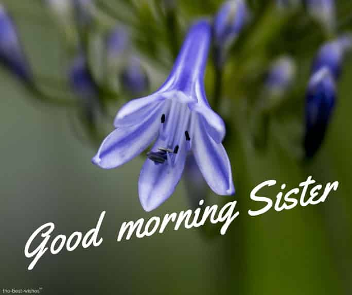good morning sisters images