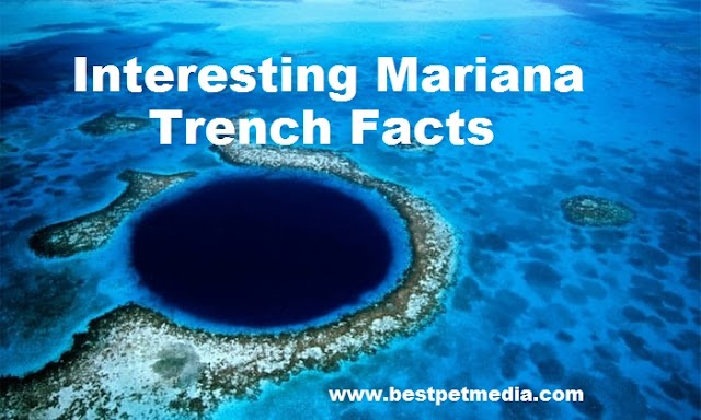 Top 10 Mariana Trench Facts that will blow your mind