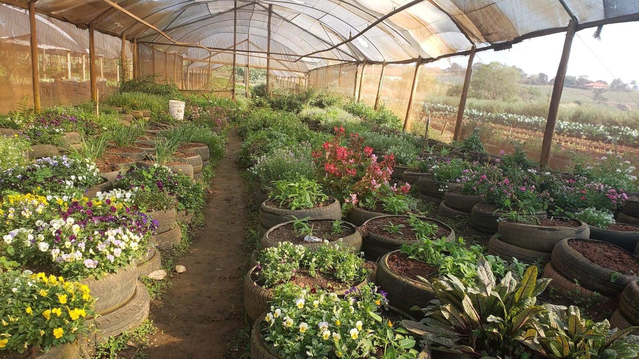 Estufa de flores comestíveis