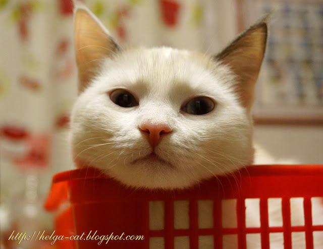 как познакомиться на котке